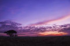 Cielo violeta en la madrugada Foto de archivo