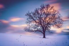 Cielo Wispy fotografie stock libere da diritti