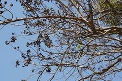 Cielo y árbol Imágenes de archivo libres de regalías