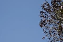 Cielo y árbol Fotos de archivo