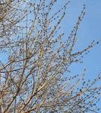Cielo y árbol fotos de archivo libres de regalías
