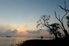 Cielo y árbol y gente Imagen de archivo