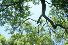 Cielo y árboles Foto de archivo