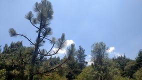 Cielo y árboles Imagenes de archivo