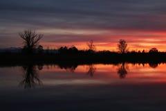 Cielo y árboles coloridos de la tarde en el lago Pfaffikon fotografía de archivo