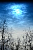 Cielo y árboles hermosos del invierno Fotografía de archivo