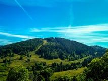 Cielo y bosque Fotografía de archivo libre de regalías