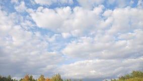 Cielo y bosque en otoño metrajes
