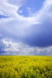Cielo y campo amarillo Foto de archivo libre de regalías