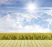 Cielo y campo hermosos del arroz Imágenes de archivo libres de regalías