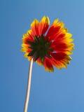Cielo y flor Foto de archivo