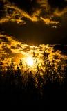 Cielo y nubes de oro Foto de archivo libre de regalías