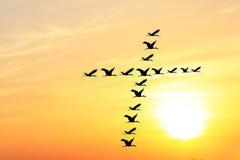 Cielo y pájaros hermosos de la tarde que forman la cruz santa Imagen de archivo libre de regalías