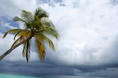 Cielo y palmera tempestuosos Foto de archivo libre de regalías