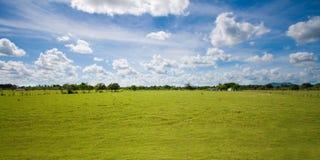 Cielo y pasto tropicales del campo Imagen de archivo