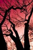 Cielo y silueta rojos fotografía de archivo