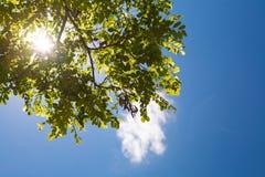 Cielo y sol en los árboles Foto de archivo