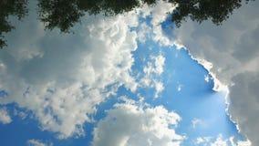 Cielo y sol a través de los árboles - el coche va en el camino almacen de video