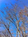 Cielos azules Imagenes de archivo