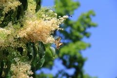 Cielos azules brillantes como contexto al arbusto floreciente con las abejas y las mariposas Fotografía de archivo