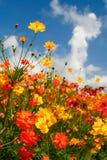 Cielos azules, nubes blancas y Wildflowers brillantes Fotos de archivo libres de regalías