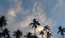 Cielos del árbol de cocos de la puesta del sol Fotos de archivo