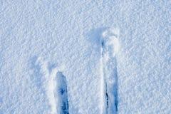 Cielos en nieve Foto de archivo libre de regalías