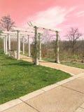 Cielos rosados imagen de archivo