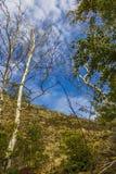 Cielos y árboles Imagen de archivo