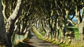 Ciemna żywopłot aleja w Północnym - Ireland fotografia royalty free