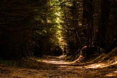 Ciemna ścieżka przez Dalby lasu obraz royalty free