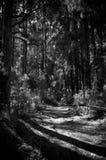 ciemna droga Zdjęcie Stock
