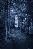 Ciemna Lasowa ścieżka - Infrared zdjęcie royalty free