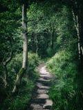 Ciemna lasowa droga przemian w zwartym gęstym lesie Zdjęcie Stock