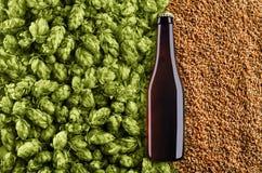 Ciemna piwna butelka na tle z chmielowym i pszenicznym Wierzchołek th fotografia stock