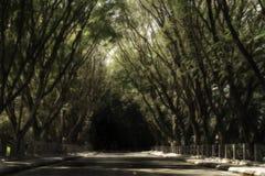 Ciemna wycieczka Fotografia Stock