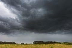 Ciemne burzowe chmury nad kukurydzanym polem przy latem Zdjęcia Stock