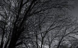 ciemne drzewo Zdjęcia Stock
