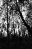 ciemne drzewo Obraz Royalty Free