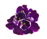 ciemne krawędzie violed biel Fotografia Stock