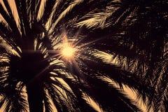 Ciemne sylwetki daktylowe palmy przeciw jaskrawemu kolorowemu niebu Zdjęcia Stock