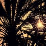 Ciemne sylwetki daktylowe palmy przeciw jaskrawemu kolorowemu niebu Zdjęcie Stock
