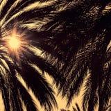 Ciemne sylwetki daktylowe palmy przeciw jaskrawemu kolorowemu niebu Obrazy Royalty Free