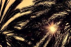 Ciemne sylwetki daktylowe palmy przeciw jaskrawemu kolorowemu niebu Fotografia Royalty Free