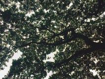 Ciemne sylwetki drzewa Obraz Stock
