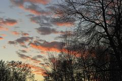 Ciemne sylwetki drzewa bez liści Fotografia Stock