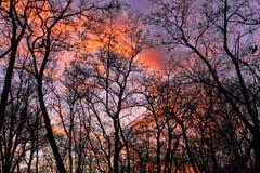 Ciemne sylwetki drzewa bez liści Zdjęcie Royalty Free