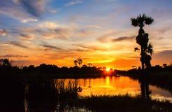 Ciemne sylwetki drzewka palmowe Obraz Stock