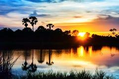 Ciemne sylwetki drzewka palmowe Fotografia Stock