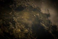 ciemne wody Obraz Stock